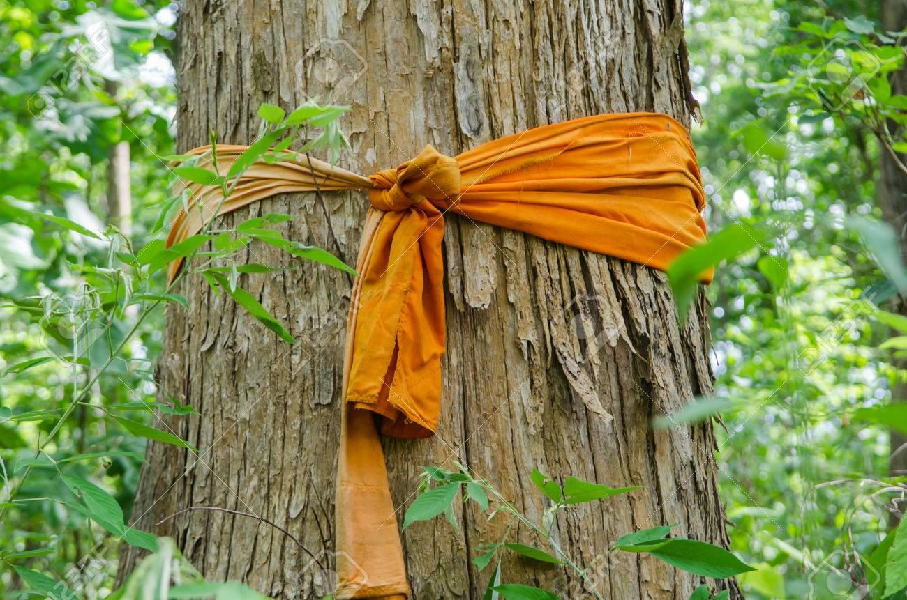 Teakbaum  Große Teak-Baum Lizenzfreie Fotos, Bilder Und Stock Fotografie ...