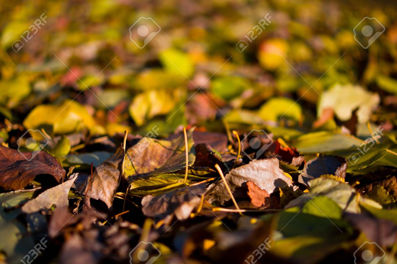 Colorful autumn leaves on the evening sun Stock Photo - 11291901