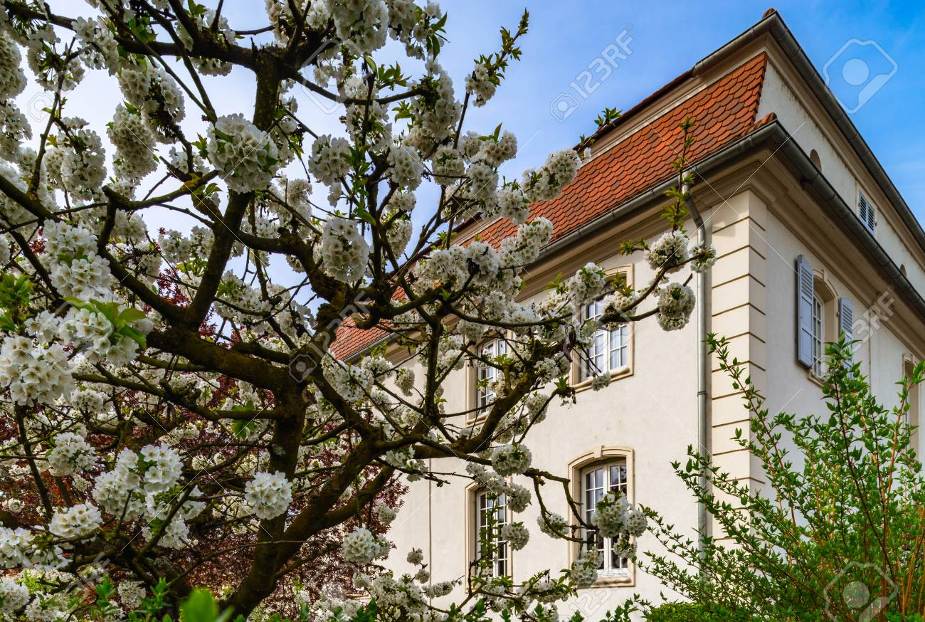Classic French House In Residential District Of Strasbourg, Blossom ...