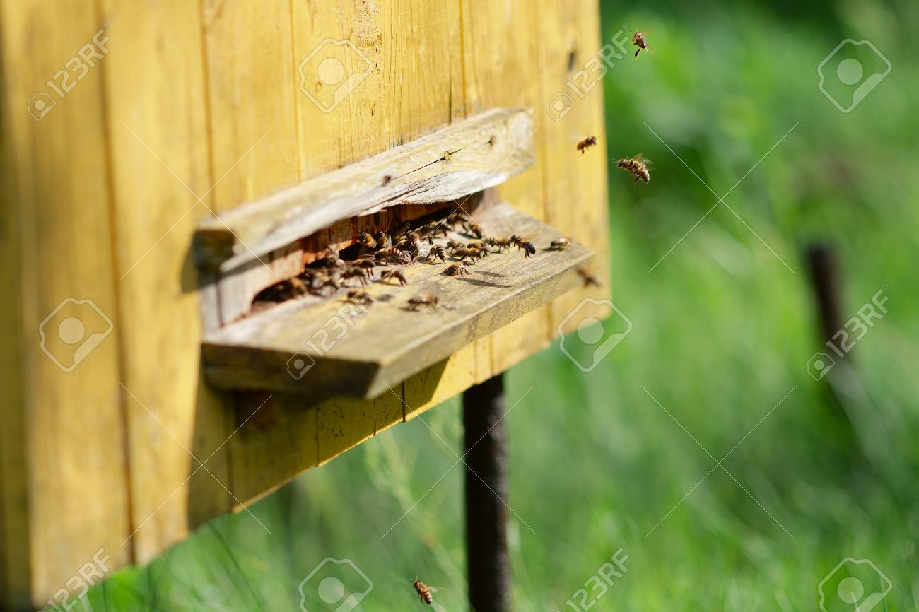 Hive with bees. Bees at beehive - 122187272