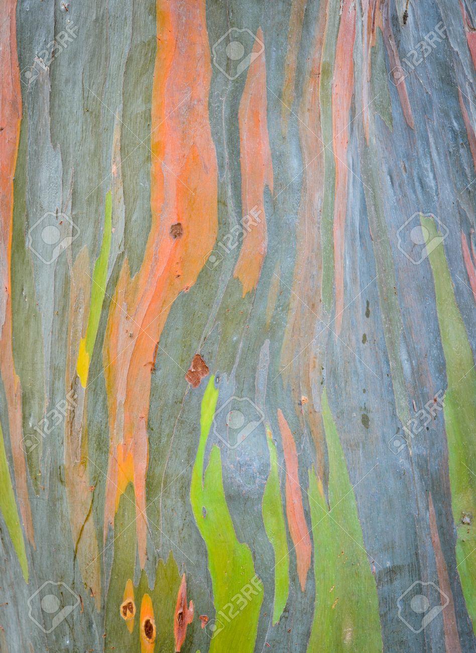 Background Of Rainbow Eucalyptus Tree Bark Stock Photo, Picture And ...