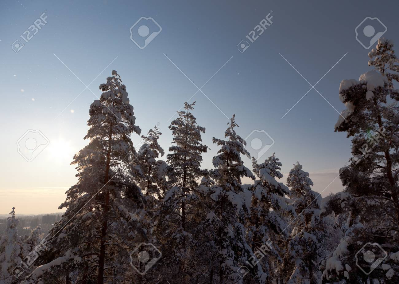 Pine trees covered by the snow with sun setting down on horizon Stock Photo - 13069884