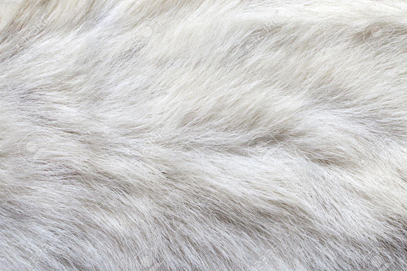 white carpet background. waves on a white fake cow fur carpet stock photo - 17603294 background