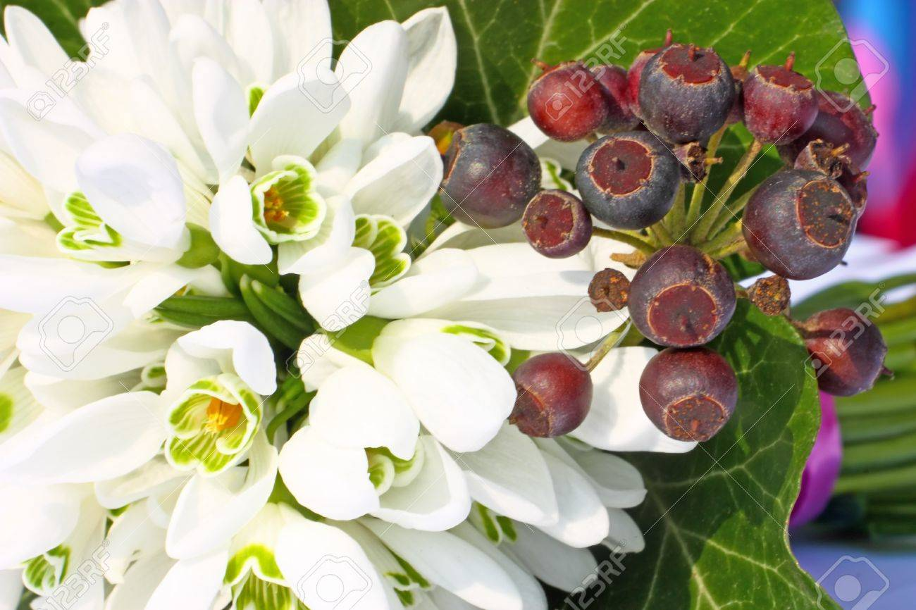 Ein Kleiner Strauß Schneeglöckchen Mit Einigen Efeu Beeren
