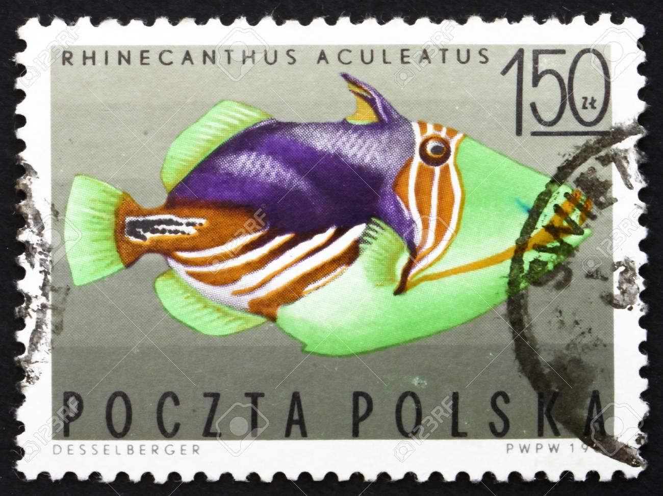 POLAND - CIRCA 1967: a stamp printed in the Poland shows Striped Triggerfish, Tropical Fish, circa 1967 Stock Photo - 14514413