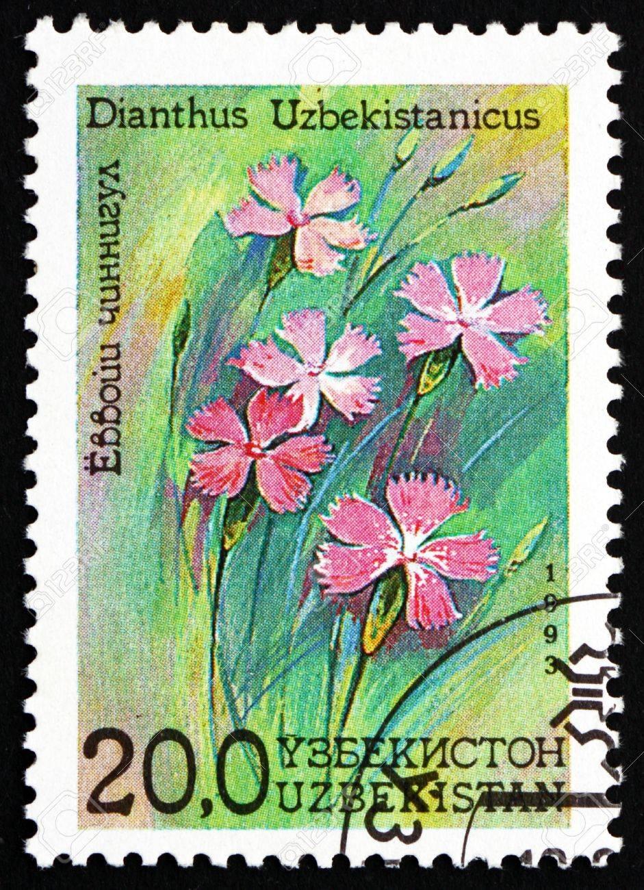 UZBEKISTAN - CIRCA 1993: a stamp printed in Uzbekistan shows Dianthus, Dianthus Uzbekistanicus, Flower, circa 1993 Stock Photo - 17145066