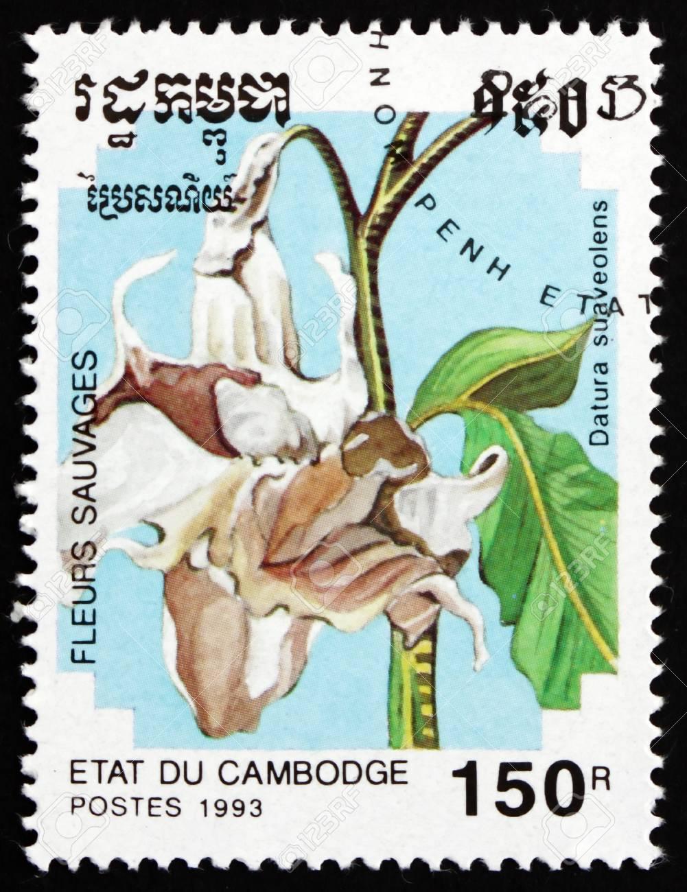 CAMBODIA - CIRCA 1993: a stamp printed in Cambodia shows Angel Trumpet, Datura Suaveolens, Flower, circa 1993 Stock Photo - 17523439