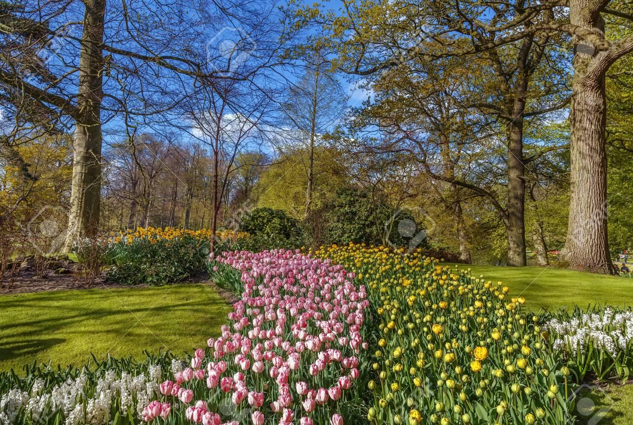 Landscape With Flowerbed In Keukenhof Garden, Nederlands Stock Photo ...