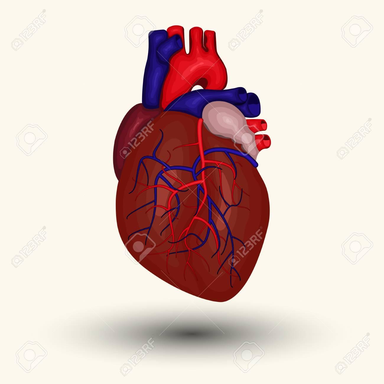 Signo Humano Corazón Icono Del Corazón Humano Dibujo Animado