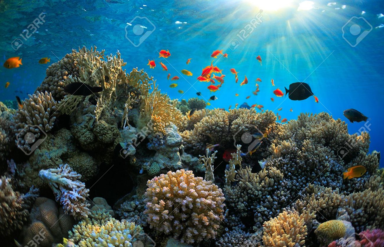 beautiful coral reef and many fish Stock Photo - 10613099