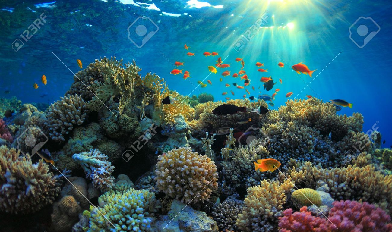 Most Beautiful Sea Images Beautiful View of Sea Life
