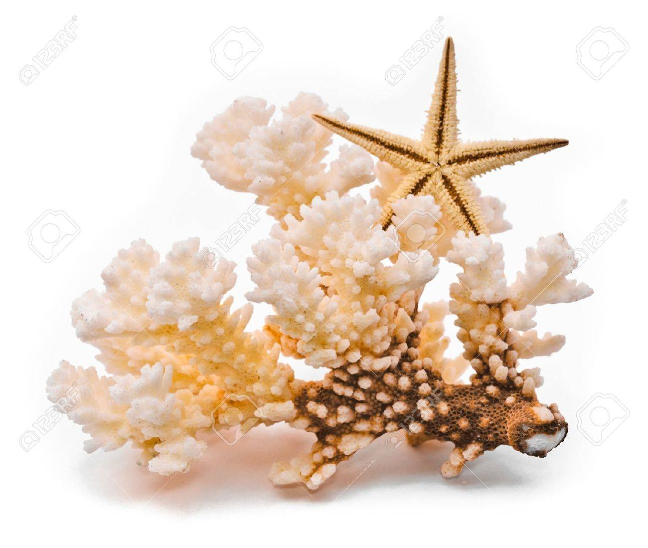 White coral and starfish. Isolated on white background - 9672119