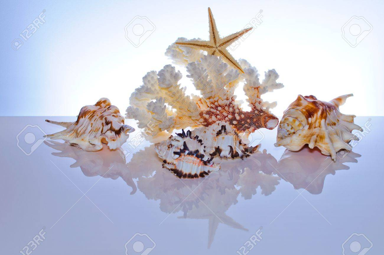 Marine coral and shells. Reflected on the table Stock Photo - 9848415