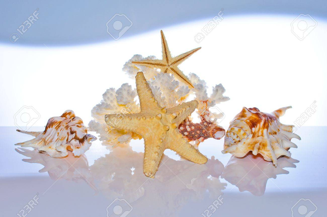 Marine coral and shells. Reflected on the table Stock Photo - 9848401