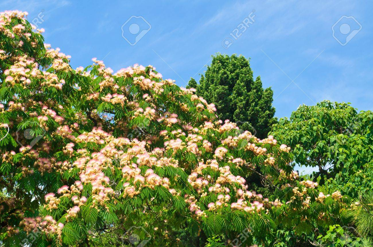 Green flowering trees on blue sky background stock photo picture green flowering trees on blue sky background stock photo 10281680 izmirmasajfo