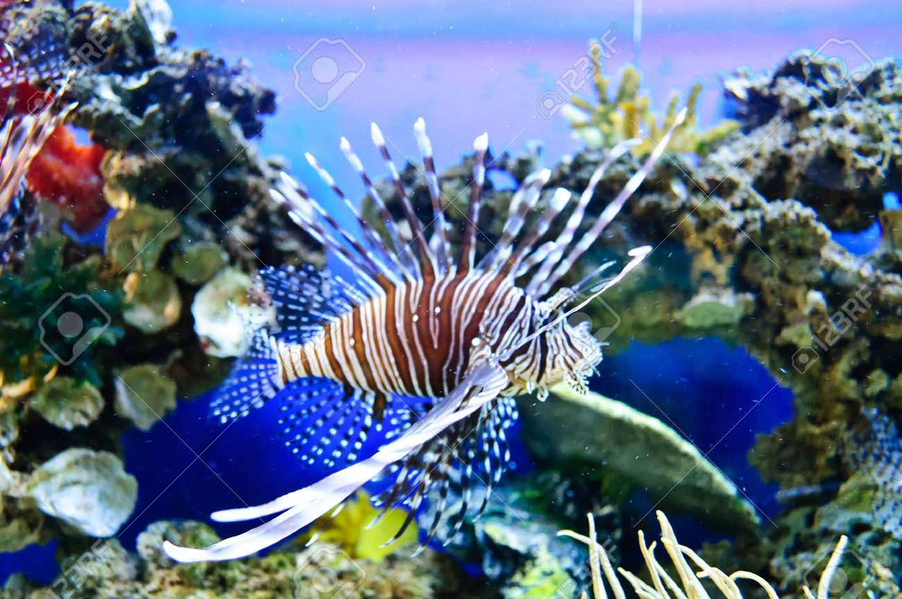 Marine tropical fish. Colorful exotic little fish - 10281674