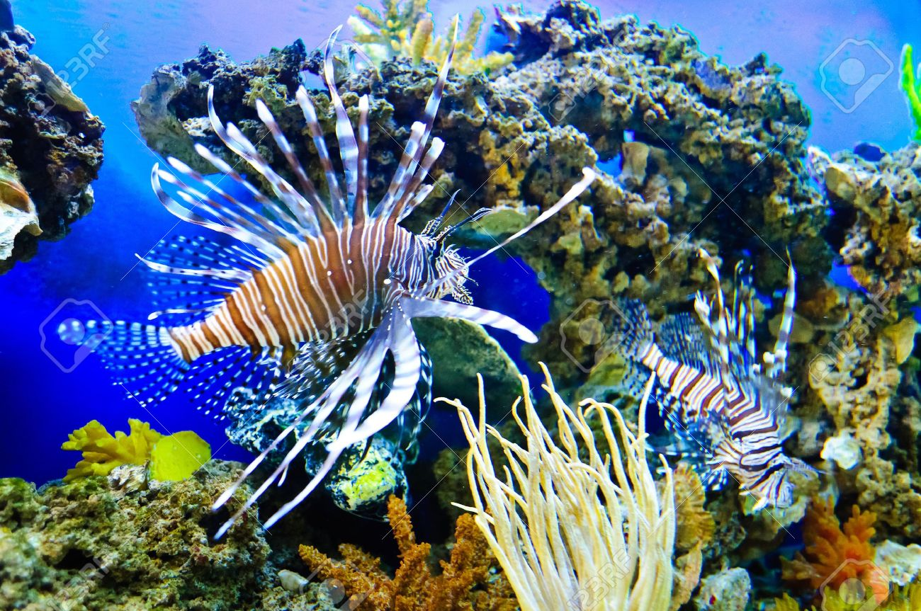 Marine tropical fish. Colorful exotic little fish - 10281683