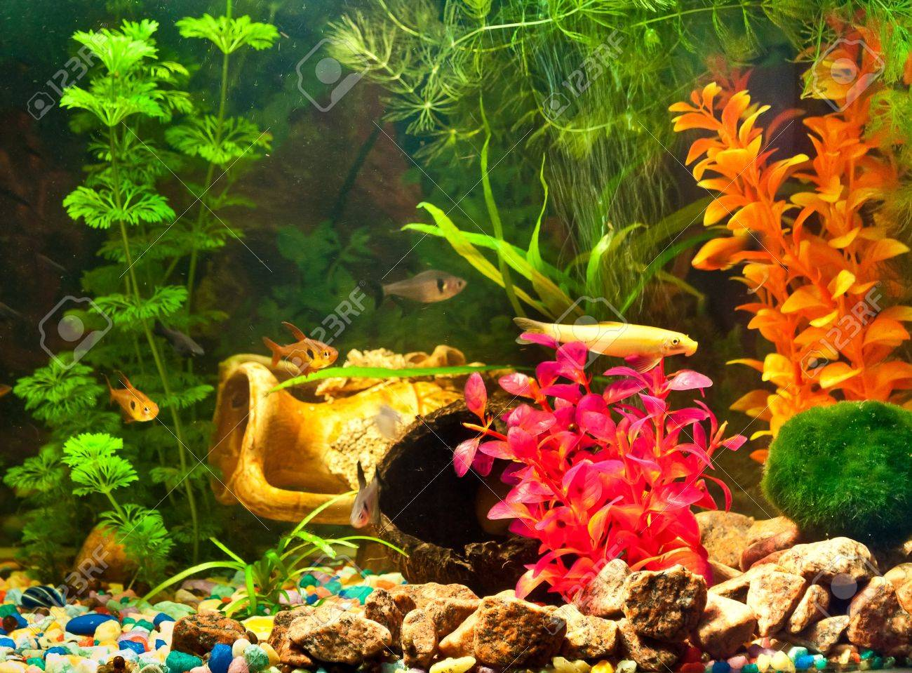 Aquarium with plants and fish - 12044315