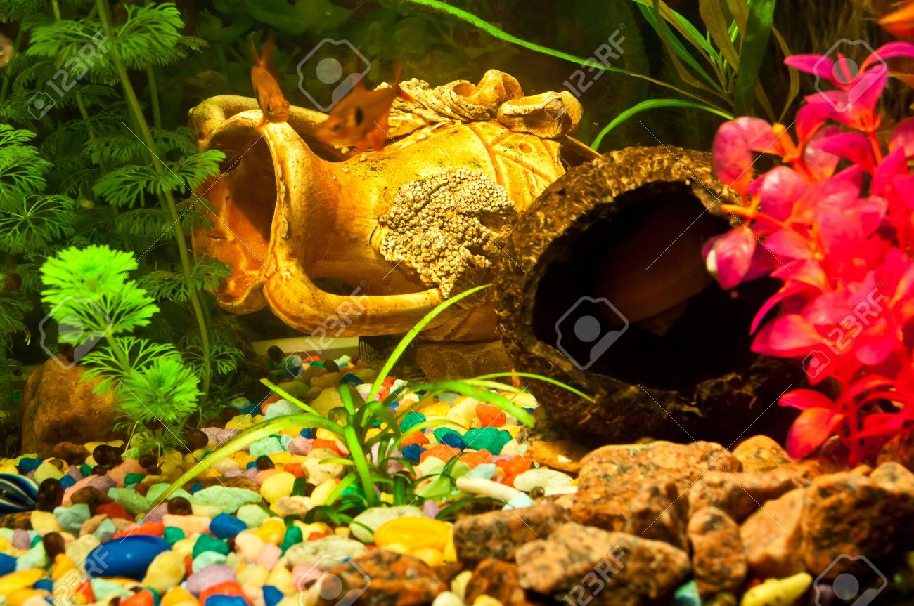 Aquarium with plants and fish Stock Photo - 12044314