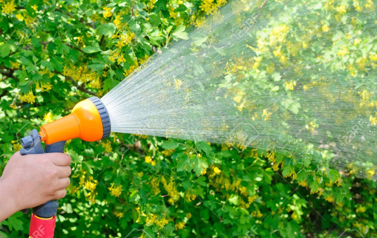 Watering the garden with a hose with a spray - 13430928