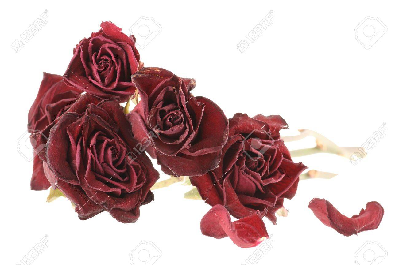 Bouquet of red dried roses isolated on white background (saved with clipping path) Stock Photo - 2826325