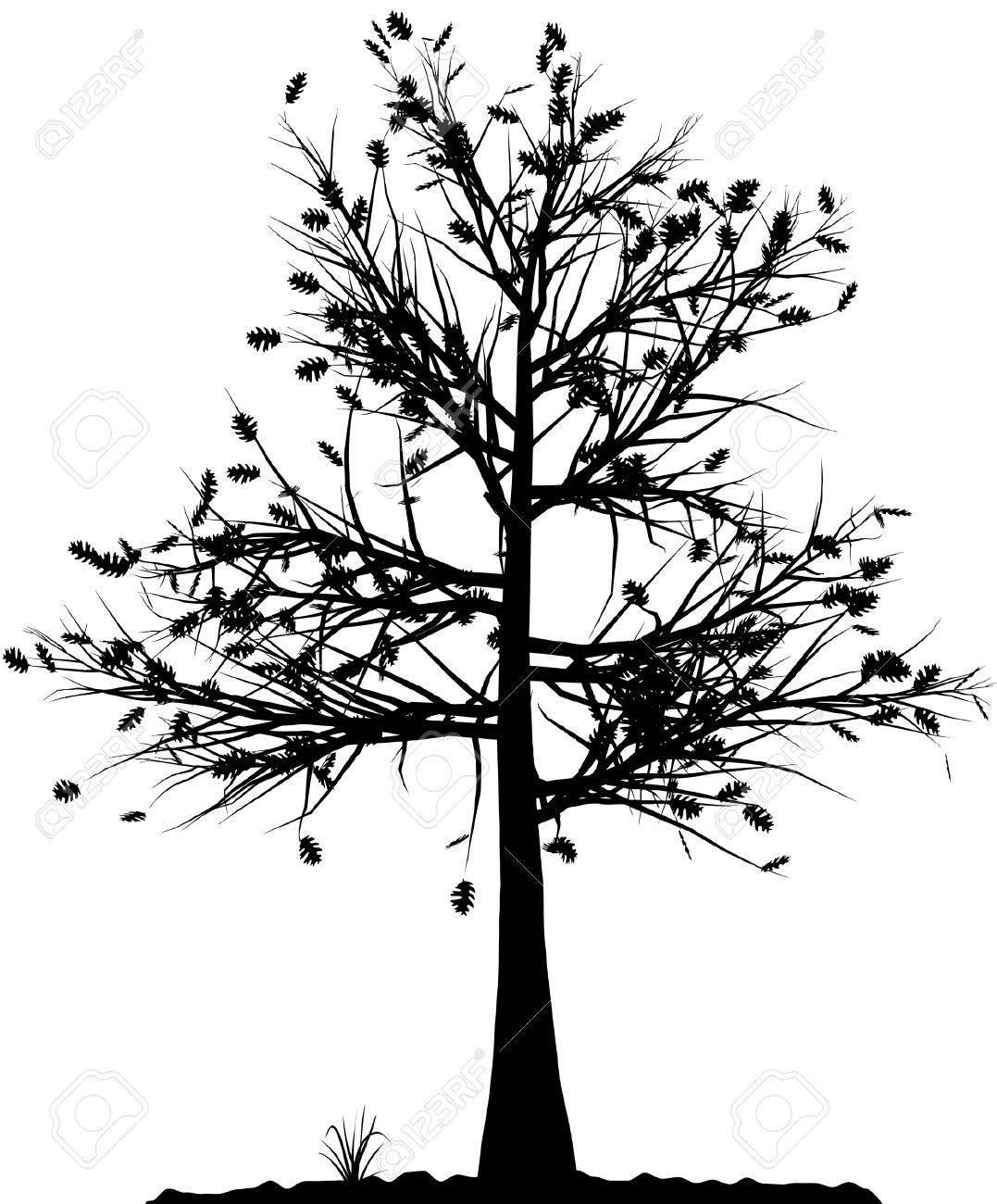 白い背景の上の高い詳細な木のシルエットあなたの設計のための白黒輪郭