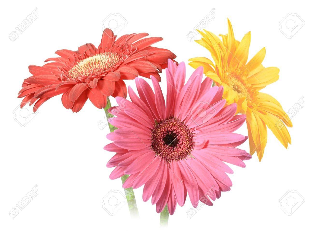 7148002-Bouquet-de-trois-fleurs-isol-es-sur-fond-blanc-Gros-plan--Banque-d'images.jpg