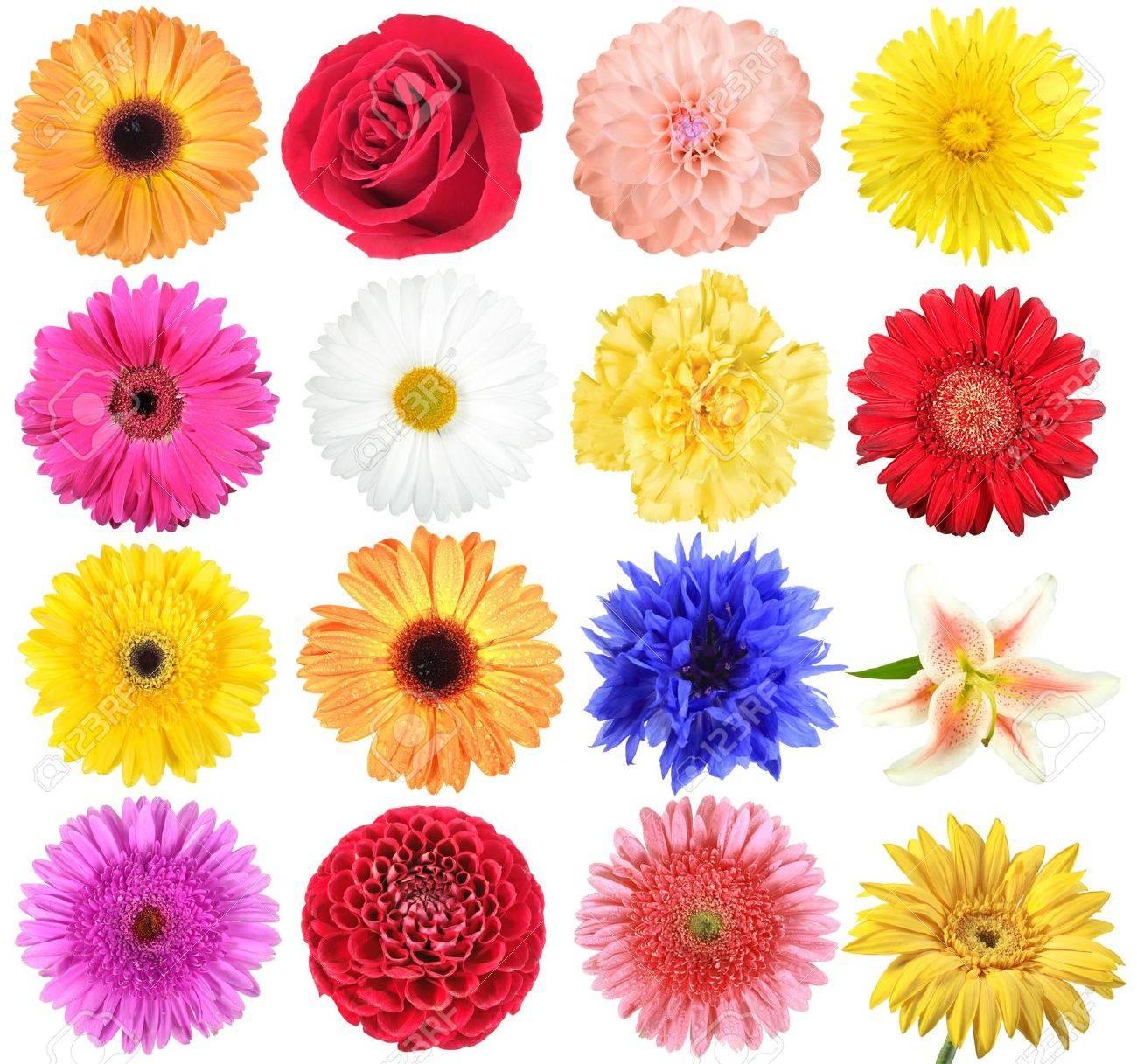Set of flowers. Isolated on white background. Close-up. Stock Photo - 7763840