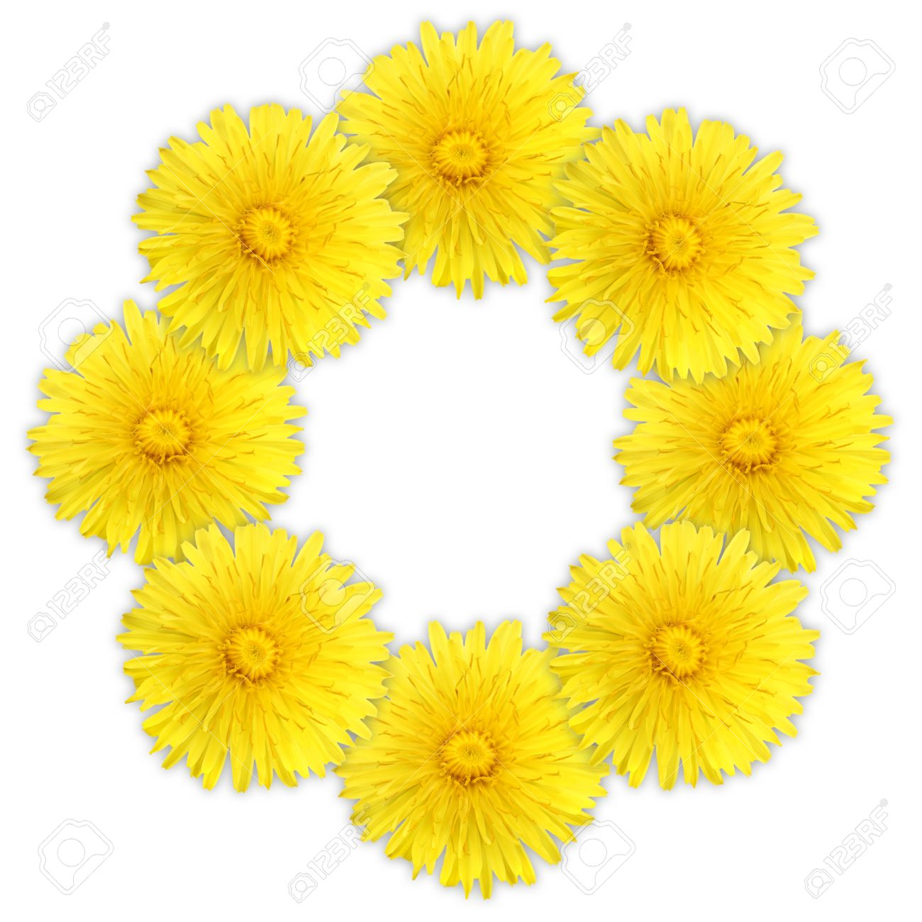 Frame As Ring Of Yellow Flowers On White Background Close Up Stock