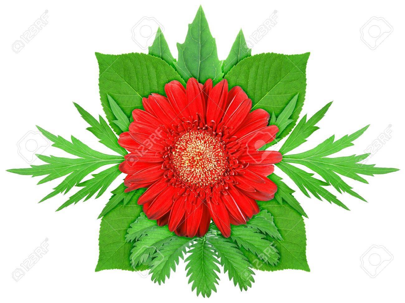 Una Flor Roja Con Hoja Verde. Naturaleza Plantilla Ornamento Para Su ...