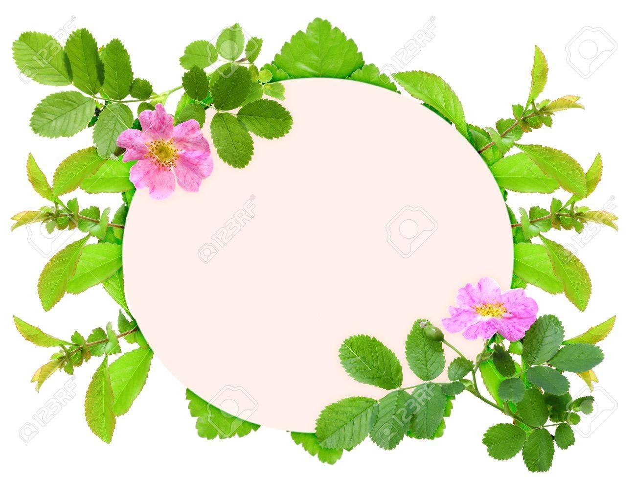 Floral Ellipse Rahmen Mit Rosa Heckenrose Blumen Und Grünen Blättern ...