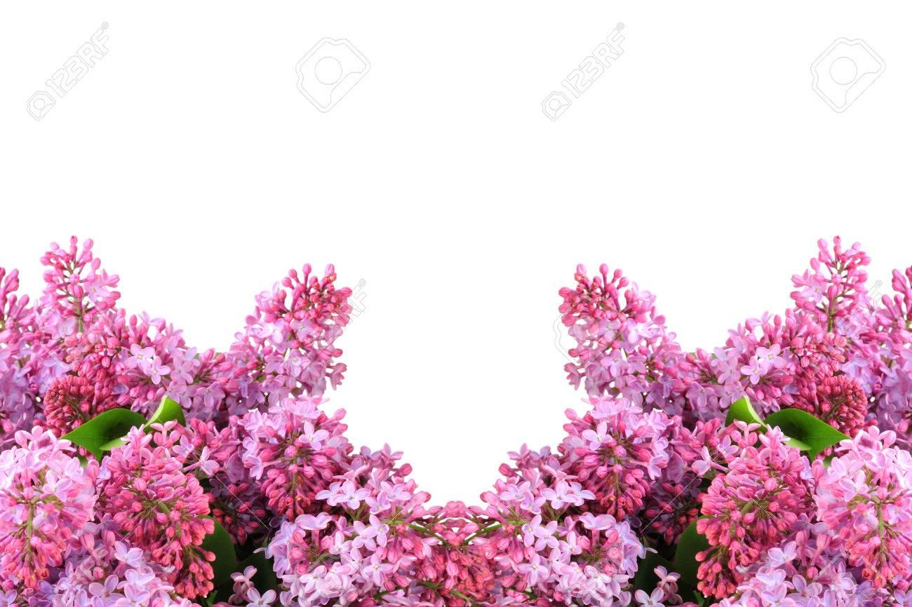Rahmen Der Lila Blumensträuße Mit Lila Blüten Und Grünen Blättern ...