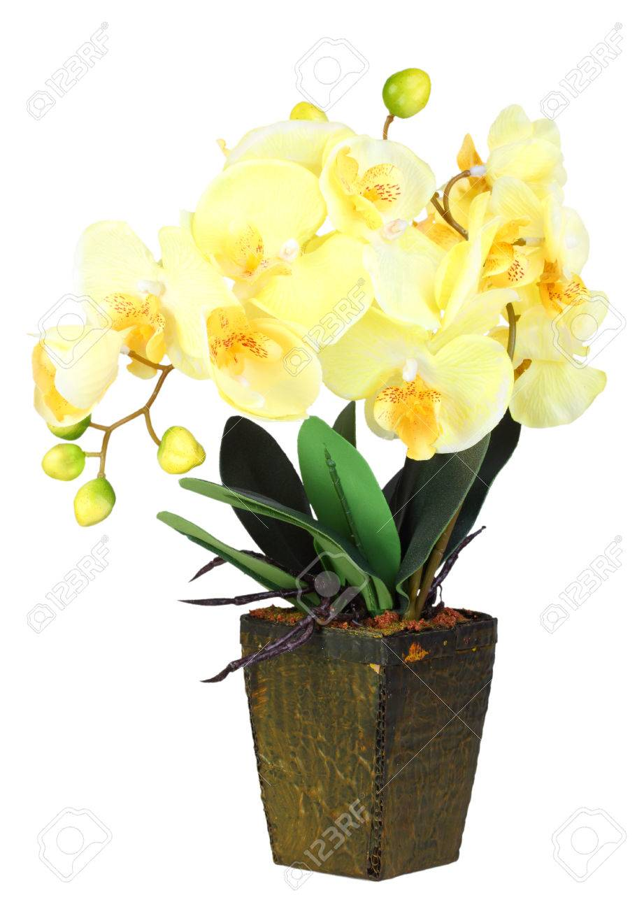 Image result for yellow orchid flower and pot