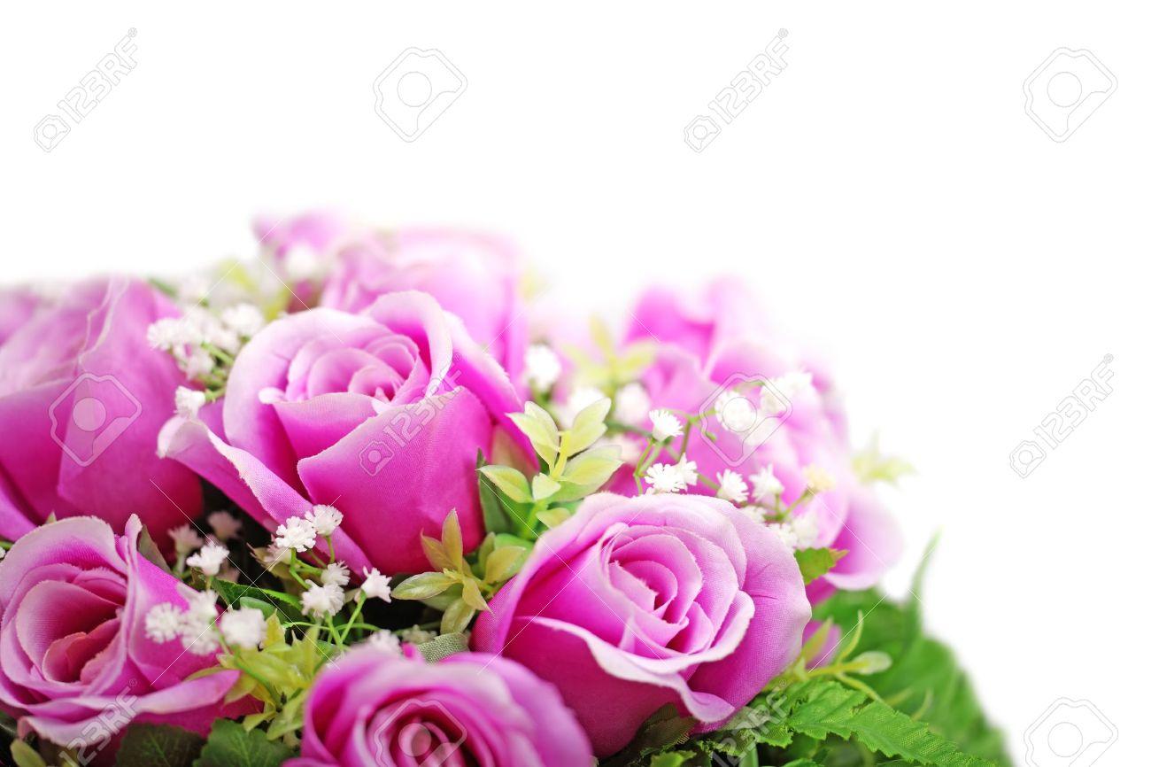 Rose Purple white background