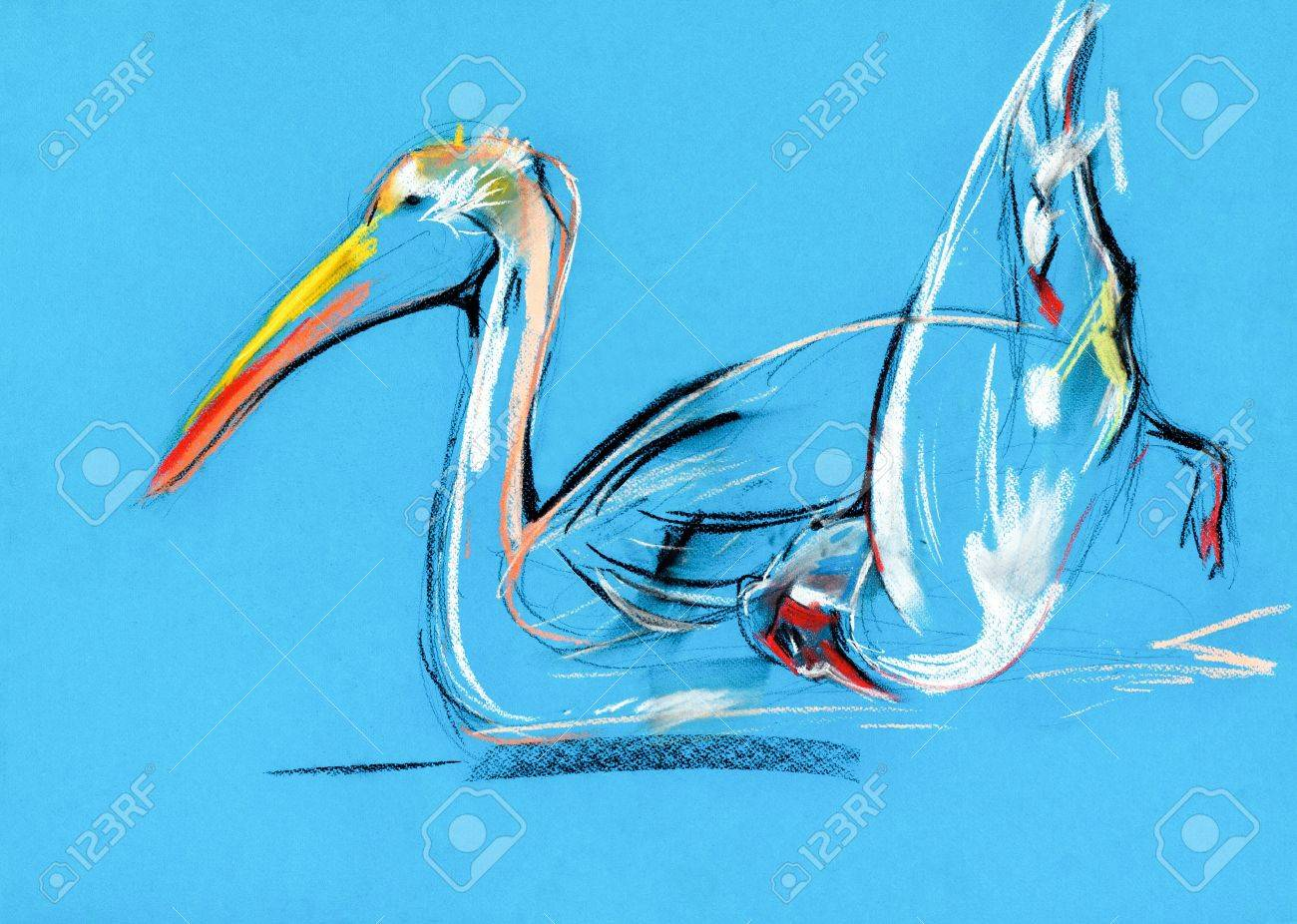 Original pastel and  hand drawn painting or  working  sketch of pelican .Free composition Stock Photo - 15527498