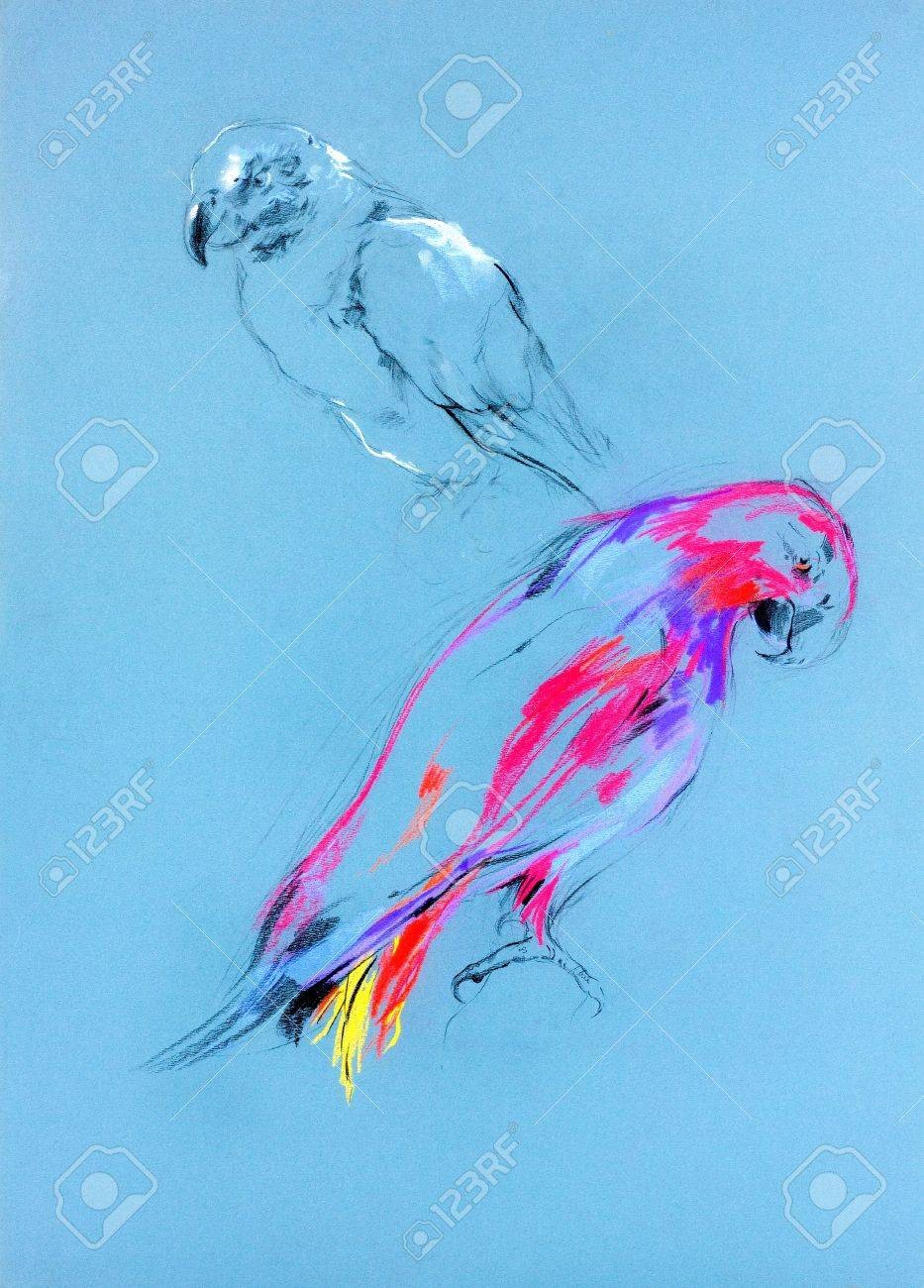 Original pastel and  hand drawn painting or  working  sketch of parrot Stock Photo - 15408469