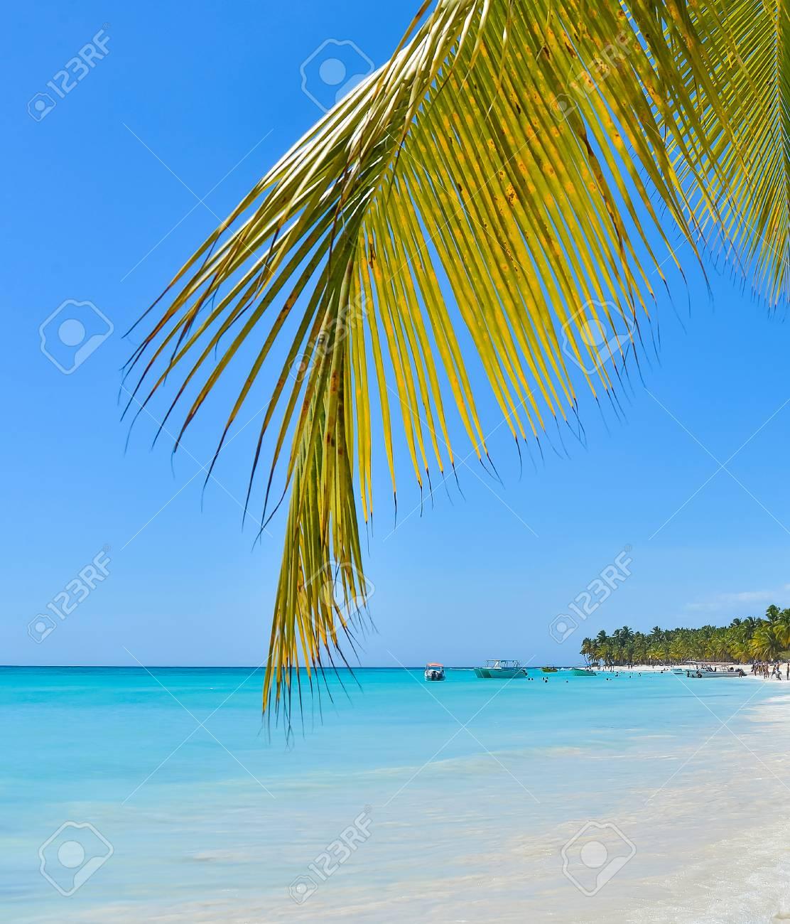 Karibik Sand Strand Mit Palmen Blatter Lizenzfreie Fotos Bilder Und
