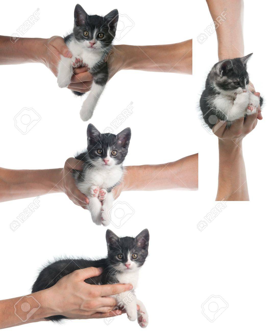 Hands holding a kitten on white background - isolated object Stock Photo - 14394724