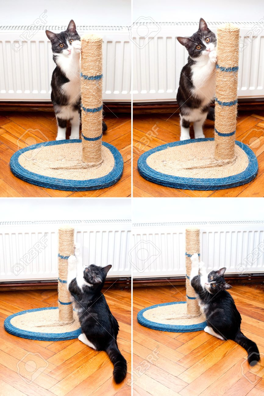 Cat scratching the rope cat post Kitty sharpen claws Cat sharpening claws using cat tree - 15391220