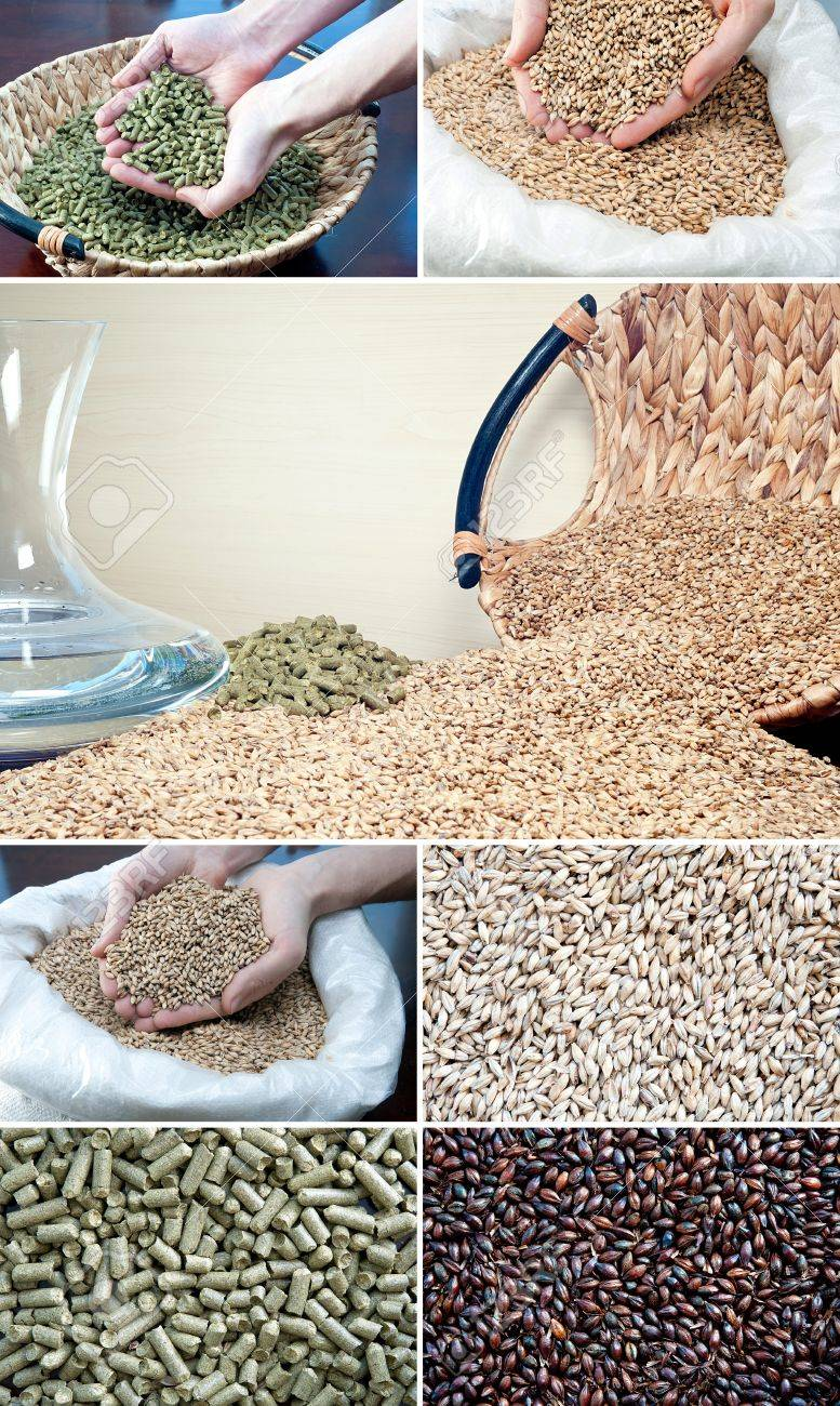 Beer ingredients barley malt, hop and water Set of photos related with brewing - 16841609