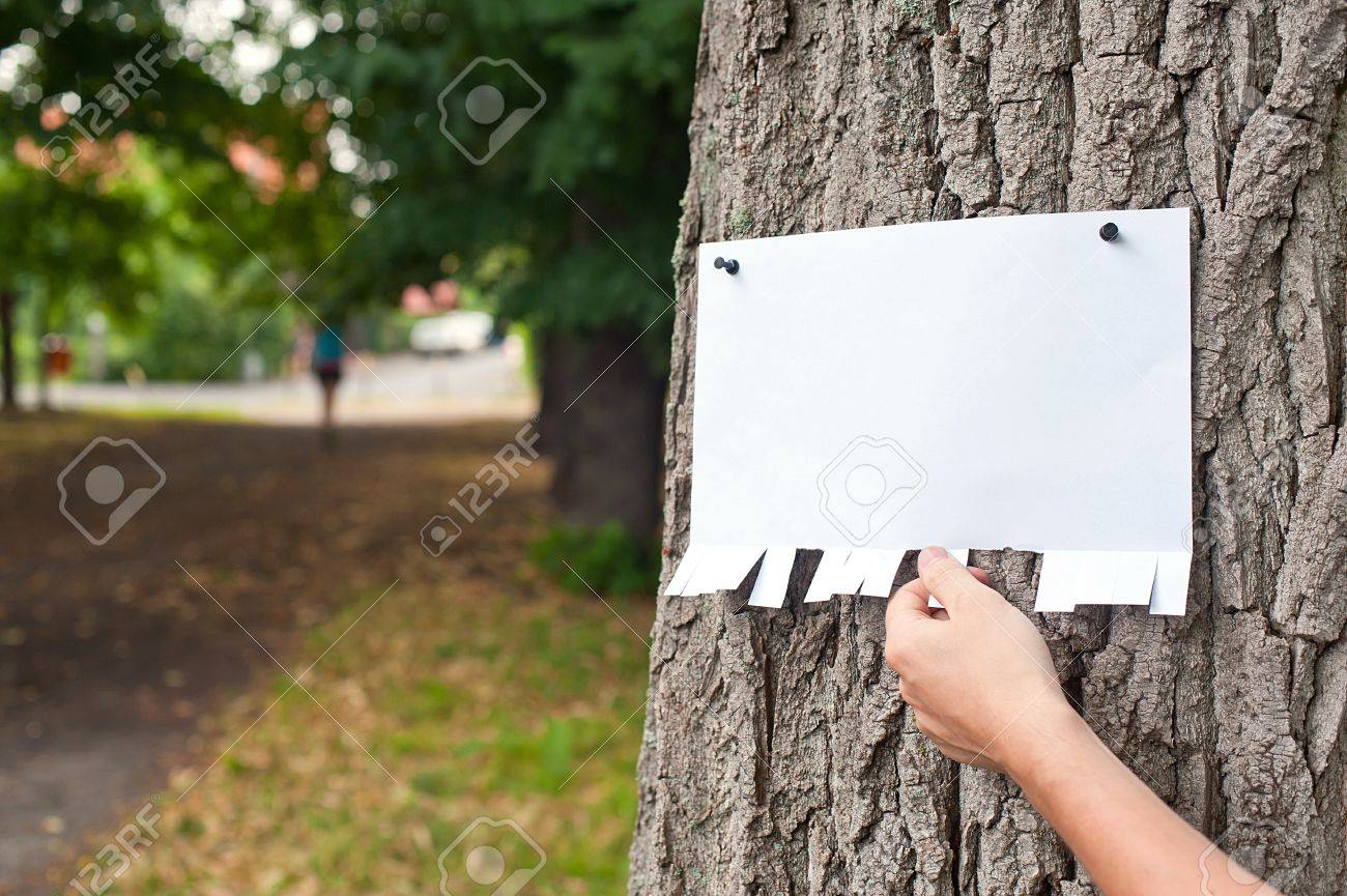 Hand picking a part of blank announcement pinned on a tree - 21402564