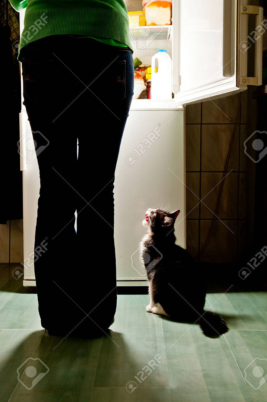 Hungry cat waiting for a meal and lick one s lips refrigerator emit bright light Dog feeding time - 24814425