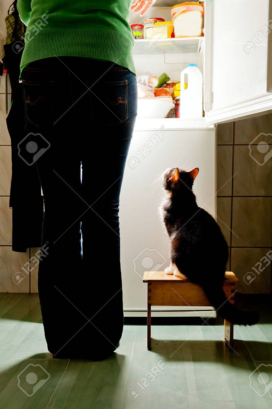 Hungry cat waiting for a meal refrigerator emit bright light cat feeding time - 24814430