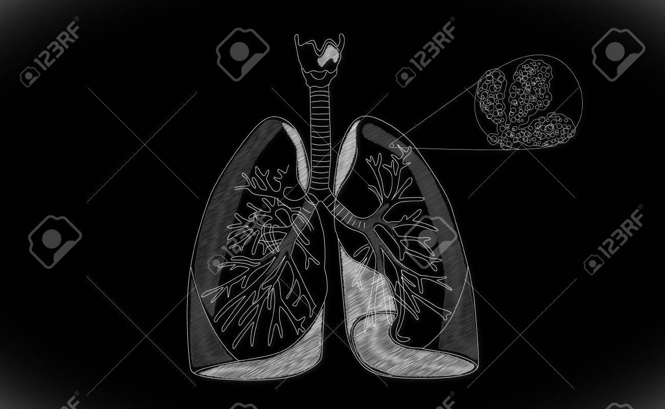 Human Lung Structure Stock Photo Picture And Royalty Free Image