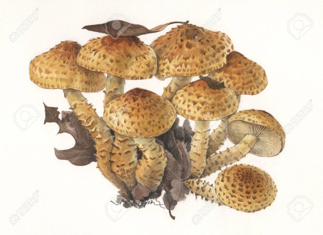 Illustration of a group of wild mushrooms in natural context Stock Photo - 24545209