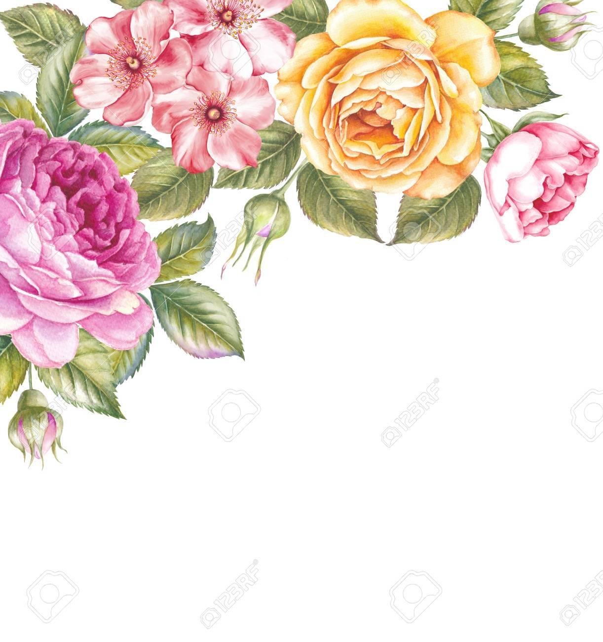 Blooming Rose Flower Watercolor Illustration Cute Pink Roses In