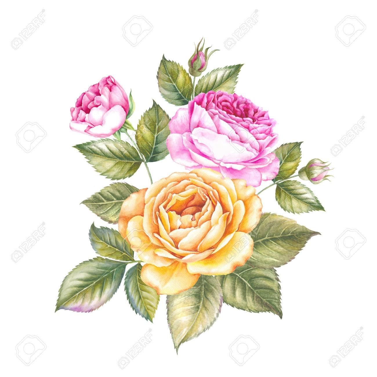 Blooming rose flower watercolor illustration cute pink roses blooming rose flower watercolor illustration cute pink roses in vintage style for design handmade mightylinksfo