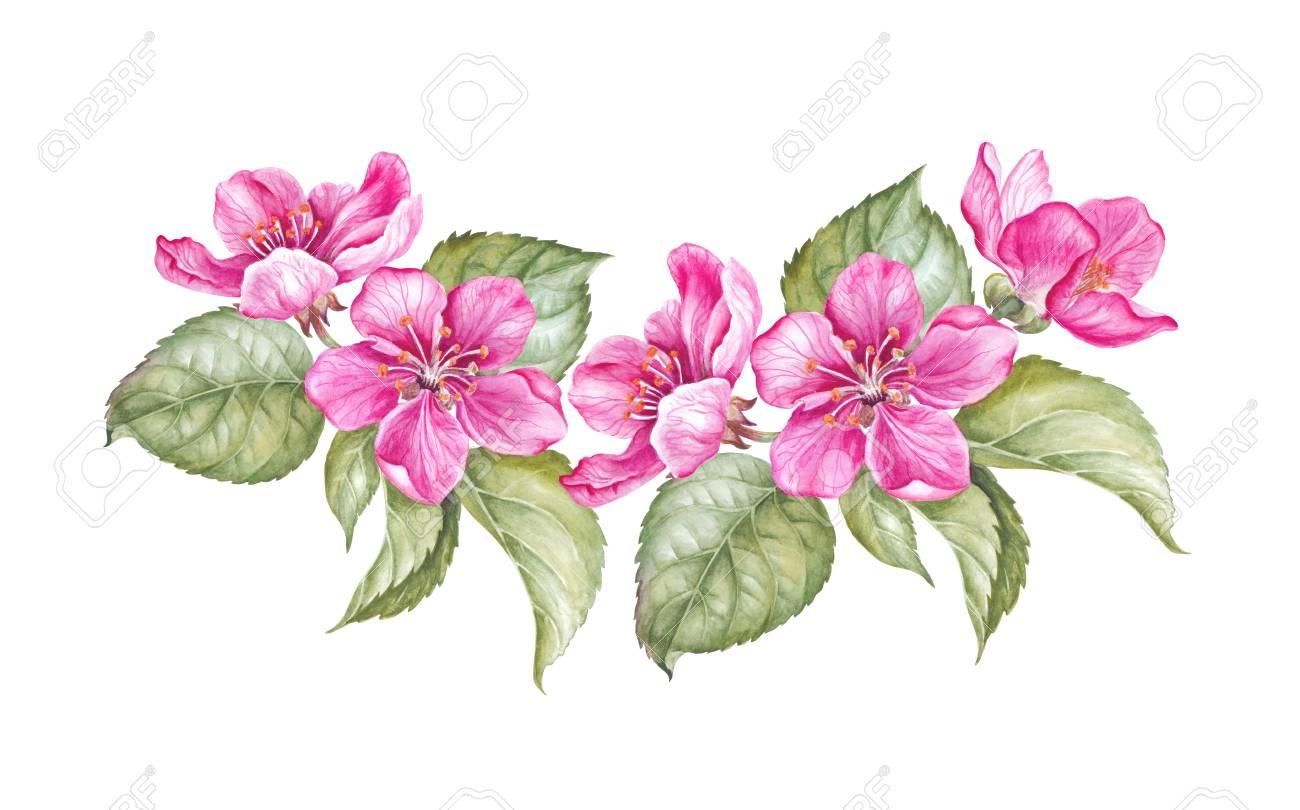 Guirlande Vintage De Sakura En Fleurs Aquarelle Illustration