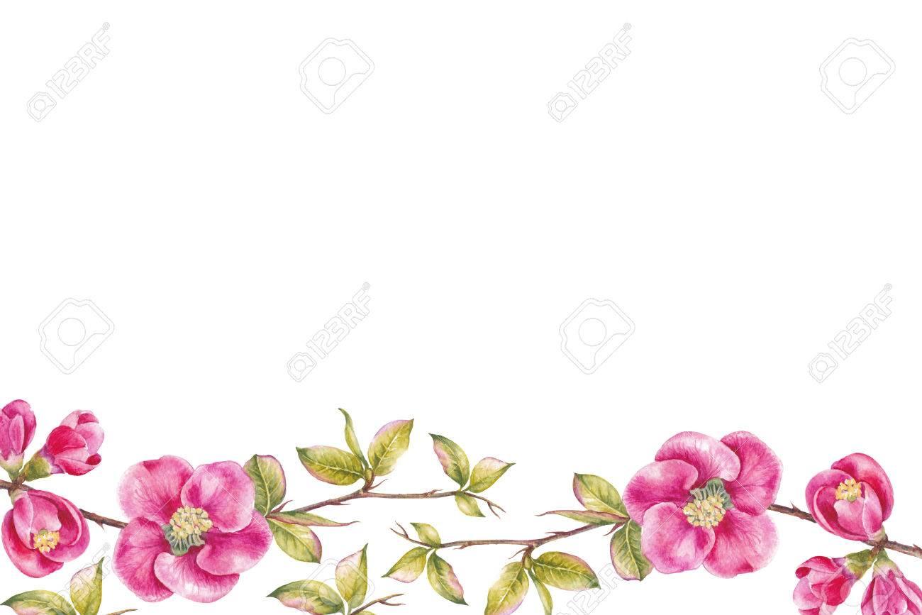 Borde De Flores De Cerezo Rosa Plantilla De Tarjeta De Invitación Para Bodas Cumpleaños U Otras Vacaciones Ilustración Botánica De Acuarela