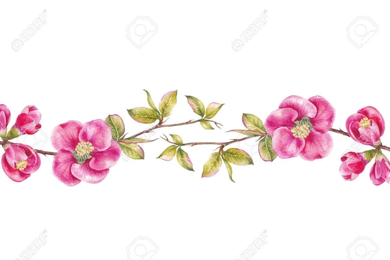 Blooming Rose Flower Watercolor Illustration Cute Pink Roses